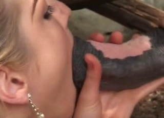 Stallions cock inside a cunt